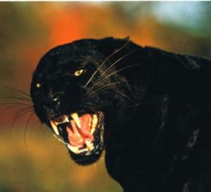 Mon animal Totem Vivrenotreamour121148881758_gros-300x272